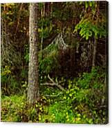 Northern Forest 1 Canvas Print