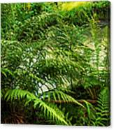Northern Forest 3 Canvas Print