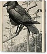 Northern Raven Canvas Print