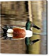 Northern Shoveler Drake Reflection Canvas Print