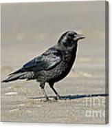 Northwestern Crow Canvas Print