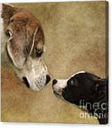 Nose To Nose Dogs Canvas Print