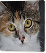 Nosey Lil Kitty Canvas Print