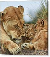 Nostalgia Lioness With Cubs Canvas Print