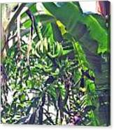 Nosy Komba Banana Palm Canvas Print