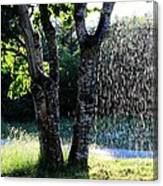 Not Raining Over Here Canvas Print