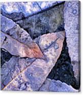 November Blues Canvas Print