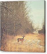 November Deer Canvas Print