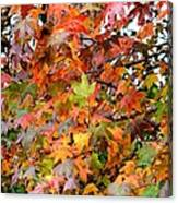 November's Maples Canvas Print