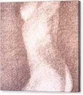 Nude Female Torso Drawings 3 Canvas Print