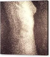 Nude Female Torso Drawings 4 Canvas Print