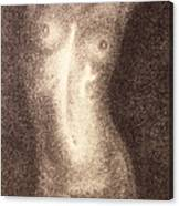 Nude Female Torso Drawings 5 Canvas Print