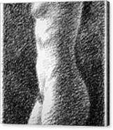 Nude Female Torso Drawings 6 Canvas Print