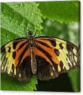 Numata Longwing Butterfly Canvas Print