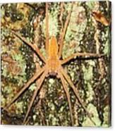 Nursery Web Spider Canvas Print
