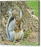 Nut Break For Chubber Canvas Print