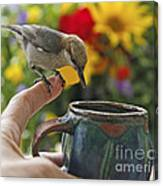 Nuthatch Bird On Finger Photo Canvas Print
