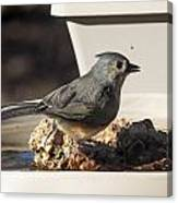 Titmouse Drinking Canvas Print