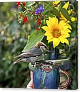Nuthatch Bird Having Tea Canvas Print