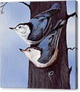 Nuthatch Pair Canvas Print