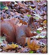 Nuts About Nuts Canvas Print