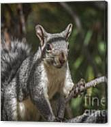 Nuts Please Canvas Print
