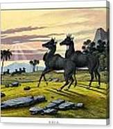 Nylghau Canvas Print