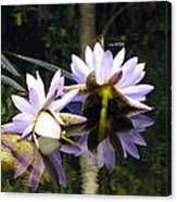 Nymphaea Colorata. Water Lilies Canvas Print