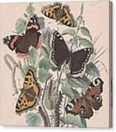 Nymphalidae Canvas Print