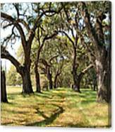Oak Allee At Roseland Plantation  Canvas Print
