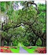 Oak Allee Brookgreen  Canvas Print