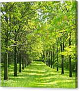 Oak Allee Canvas Print