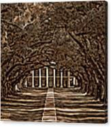 Oak Alley Bw Canvas Print