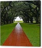 Oak Alley Path Canvas Print