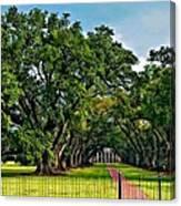 Oak Alley Plantation 2 Canvas Print