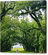 Oak Alley Trees Canvas Print