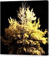 Oak At Night Canvas Print