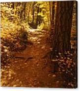 Oak Creek Trail Canvas Print