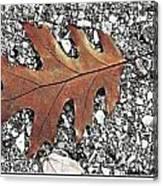 Oak Leaf On Asphalt  Canvas Print
