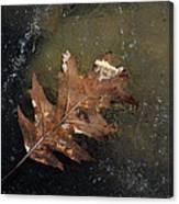 Oak Leaf On Ice Canvas Print