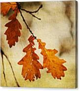 Oak Leaves At Autumn Canvas Print