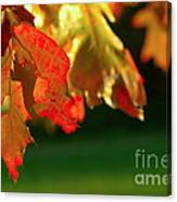 Oak Leaves Canvas Print