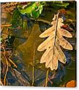 Oak Leaves In A Puddle Canvas Print
