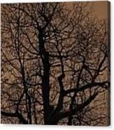 Oak Silhouette  Canvas Print