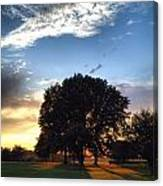 Oak Tree At The Magic Hour Canvas Print