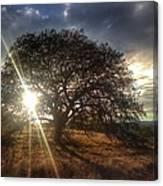 Oak Tree At The Plateau Canvas Print