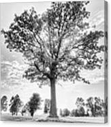 Oak Tree Bw Canvas Print
