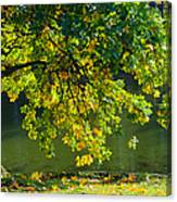 Oak Tree By The Pond - Featured 3 Canvas Print