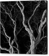 Oak Tree Canopy Under A Night Sky Canvas Print