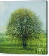 Oak Tree In Spring Canvas Print